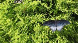 «Papillons en liberté» au Jardin botanique