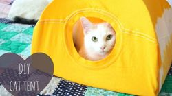 Voici comment fabriquer une tente pour chat avec un vieux