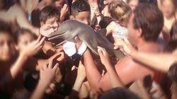 Ils sortent un bébé dauphin rare de l'eau pour des selfies. Le dauphin