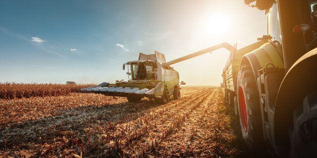 Libre-échange: les producteurs agricoles risquent d'être déçus par le