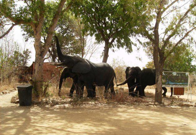 L'éléphant, un animal si
