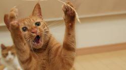 Le dégriffage des chats sera interdit en