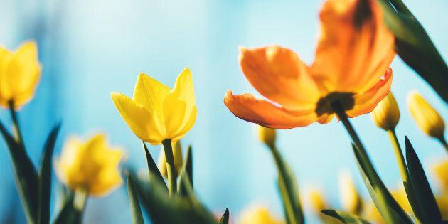 Un printemps à
