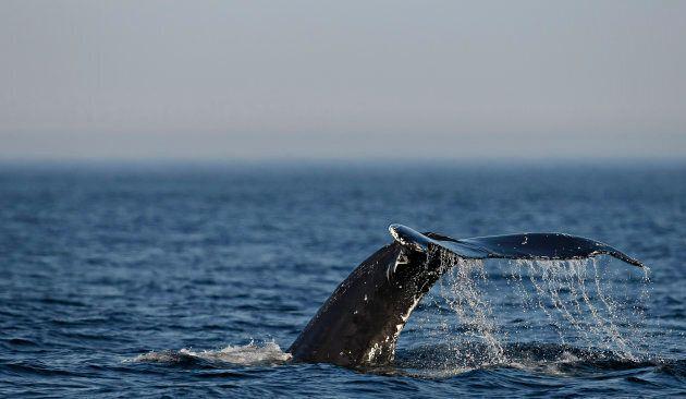De nouvelles règles pour protéger les mammifères marins au