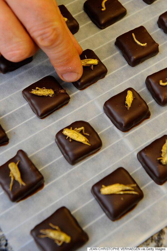 Cinq créations originales utilisant le chocolat