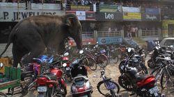 Une éléphante affolée saccage une ville en Inde