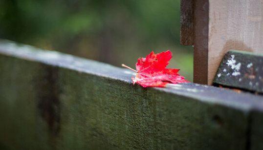 Les couleurs d'automne du Québec dans la lentille d'un photographe français