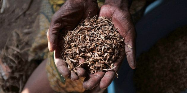 CARAMA, BURUNDI - JUNE 23: A woman holds up a handful of rice, some of the only food for her family,...