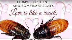 Saint-Valentin: donnez le nom de votre bien-aimé (ou de votre ex) à un