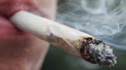 La marijuana médicinale autorisée sous toutes ses