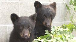 Un agent de la faune suspendu pour avoir refusé d'abattre des