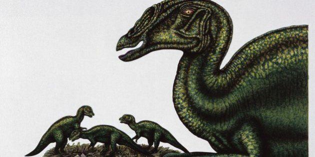 Palaeozoology - Cretaceous period - Dinosaurs - Saurolophus - Art work by Deborah