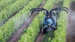 À propos des pesticides dans le