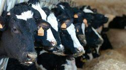 Fermeture de fermes laitières: le Bloc blâme