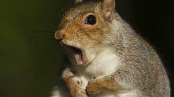 Un écureuil plonge un quartier dans le