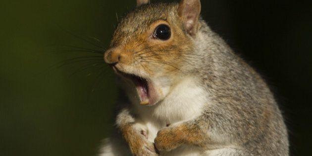 Nouvelle-Écosse: un écureuil plonge un quartier dans le noir en
