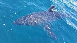 Cet élève a trouvé une solution contre les attaques de requins (même si son prof la trouvait