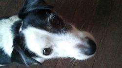 Interdiction d'animaux: la SPCA espère forcer la main des