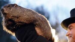 Les marmottes ne s'entendent
