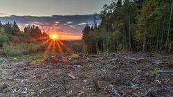 Commençons par protéger la forêt pour nous réconcilier avec les Premières