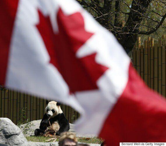 Zoo de Toronto: Un grand panda donne naissance à deux petits,