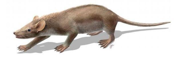 Découverte d'un fossile de mammifère unique en son genre, couvert de poils et