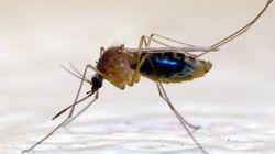 Attention aux moustiques et aux