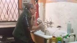 Ce toiletteur s'éclate quand il prend soin des animaux
