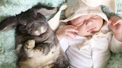 Adorable amitié entre un bébé et des lapins