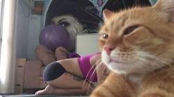 Ce chat n'est pas impressionné par cette position de yoga