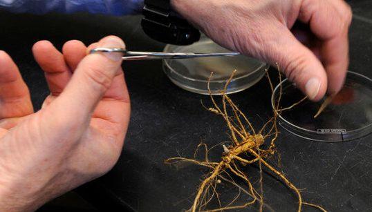 Les cultures OGM ne seraient pas plus risquées pour l'environnement et la