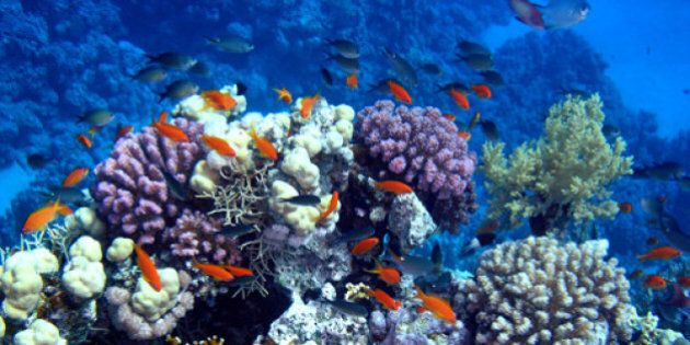 Panama is said to have one of the most diverse coral reefs available in the Caribbean, if not the world....
