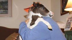 Des chevaux miniatures au service des patients