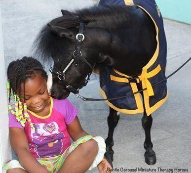 Ces chevaux miniatures sont parfaits pour aider les patients