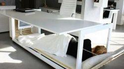 Envie d'une sieste au bureau? Voici le bureau-lit!