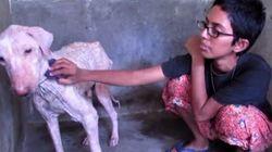 L'émouvante transformation d'un chien abandonné