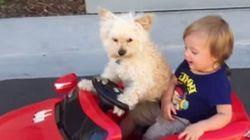 Ce bambin et sa chauffeuse canine vont vous faire fondre