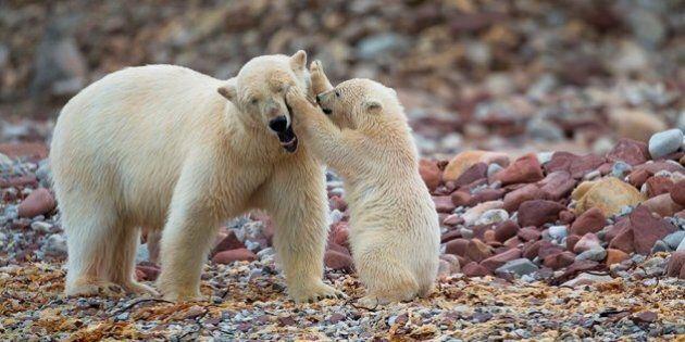 L'archipel de Svalbard: Éden arctique en