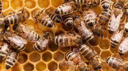 180 ruches et 5 millions d'abeilles volées: une
