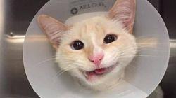 Une chatte miraculée sourit à la vie