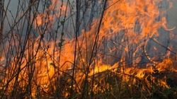 Risques élevés d'incendies de forêt à
