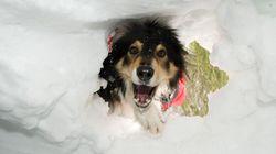 Autriche : des chiens entraînés à sauver des vies