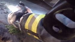 Des pompiers sauvent des chatons de la plus douce des manières