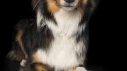 Ces photos de chiens zen vous rendront zen vous