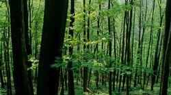 Perdu 24h en forêt à 5 minutes de son