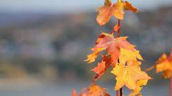 Québec gratuit : Des activités pour commencer l'automne du bon