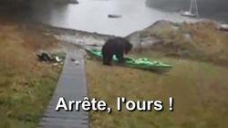 Les internautes auraient préféré que l'ours dévore cette kayakiste