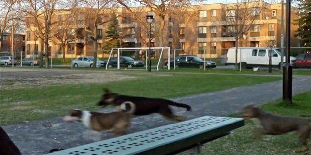 Un documentaire tourné dans le quartier Saint-Michel à Montréal en ouverture des RIDM