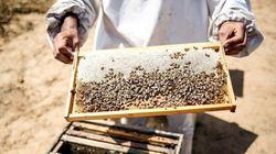 Un vol de plus de 180 ruches et de 5 millions d'abeilles au