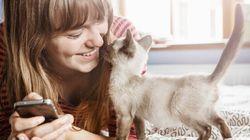 31 images qu'uniquement les propriétaires de chat